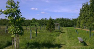 Henley burial ground